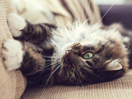 Как избавиться от запаха кошачьей мочи — Эффективные средства