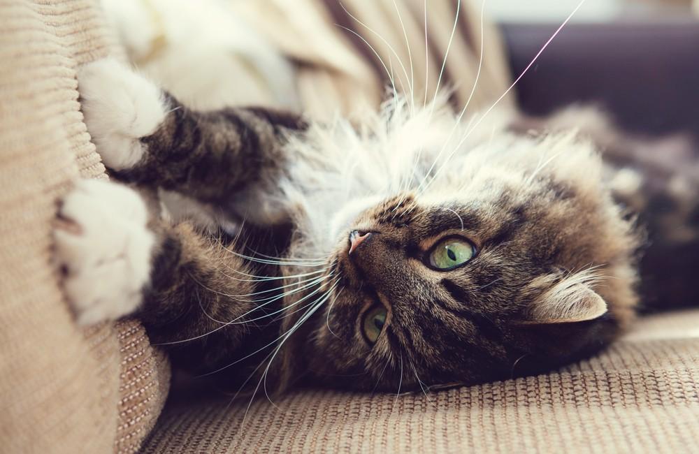 Чем убрать запах кошачьей мочи — Эффективные средства